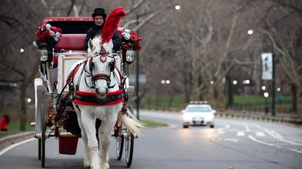 5 February - horses in Manhattan - 05HORSES-articleLarge