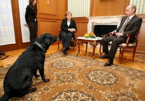 epa00908985 Putin's pet dog Koney walks in the room, where Russian President Vladimir Putin talks to German Chancellor Angela Merkel during their meeting at his residence in Sochi, a Black sea resort, 21 January 2007. Angela Merkel arrived in Russia on a one-day working visit.  EPA/SERGEI CHIRIKOV